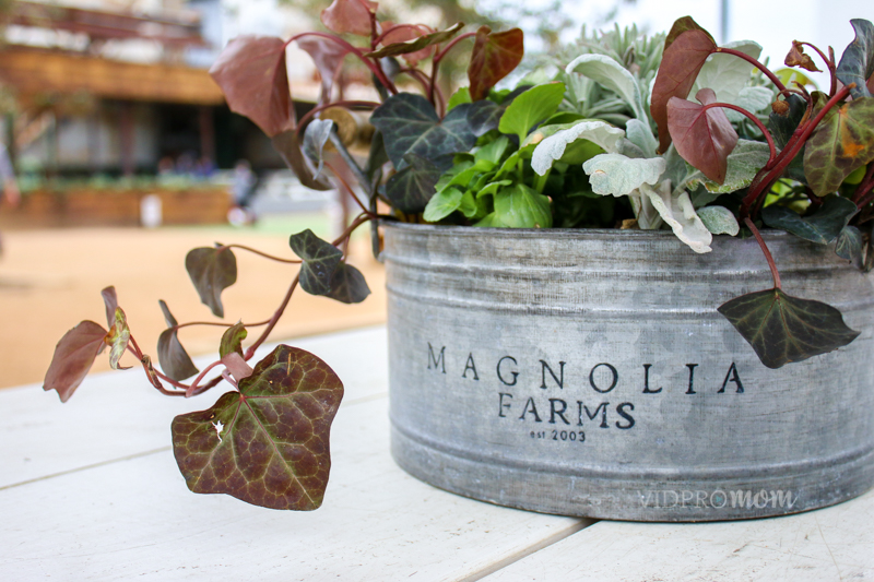At Magnolia Market, Even Picnic Tables By The Food Trucks Are Perfectly Decorated